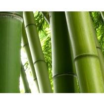 Bamboe dekbed SOLO WK-1